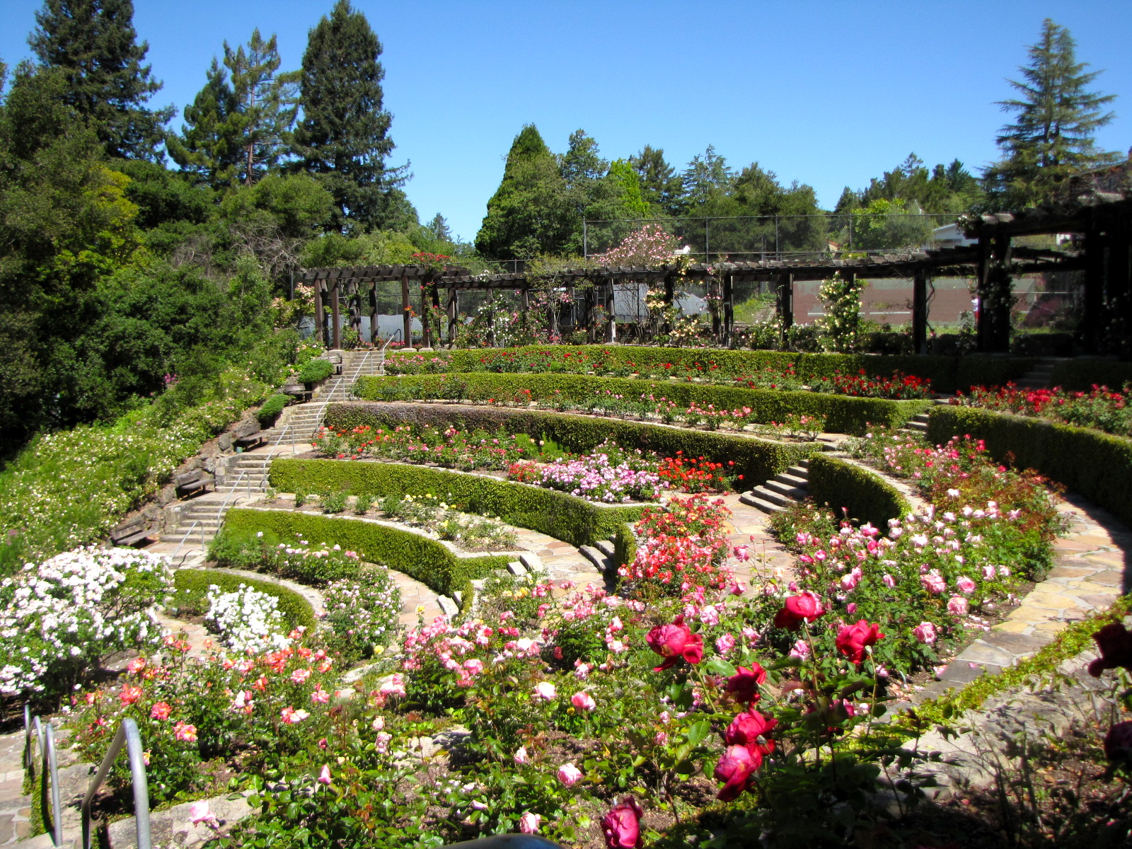 A wonderful day at the berkeley rose garden for Terrace landscape