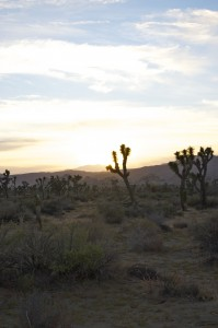 Sunset in the gorgeous Joshua Tree Park
